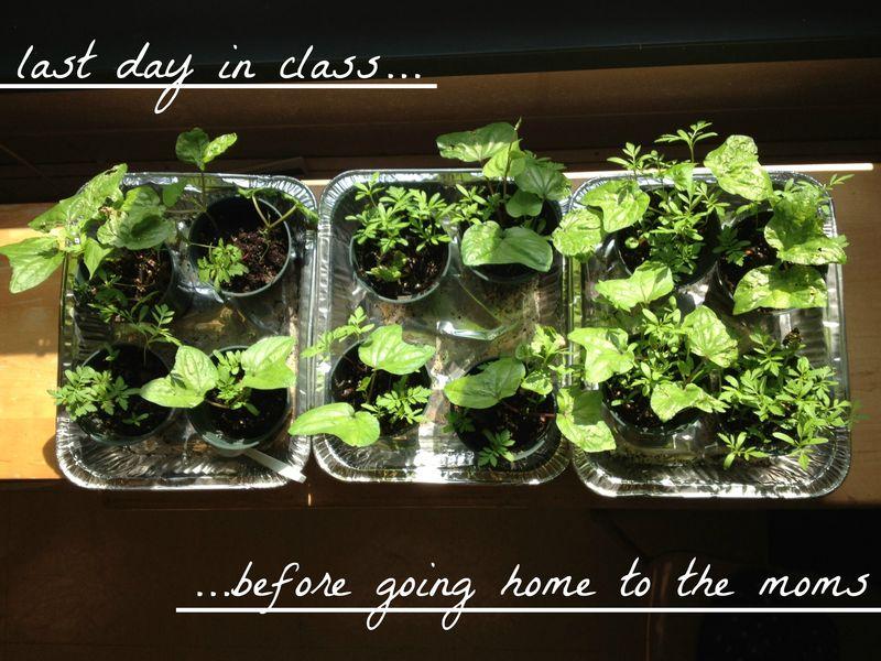 Classroomgarden07