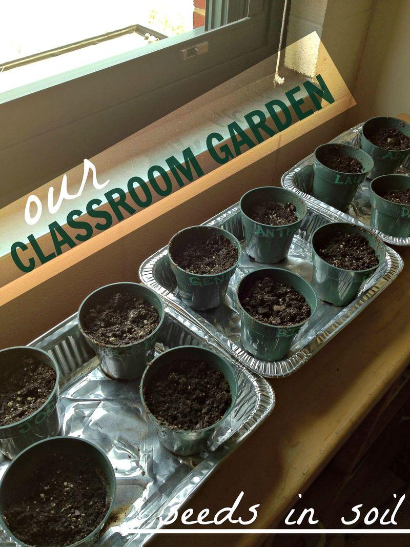 Classroomgarden01