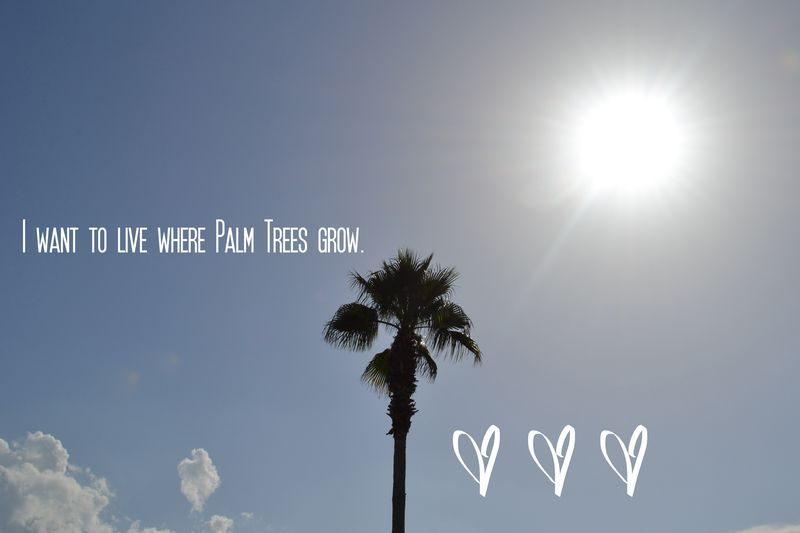 I want to live where palm trees grow