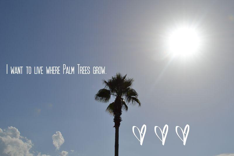 I want to live where palm trees grow
