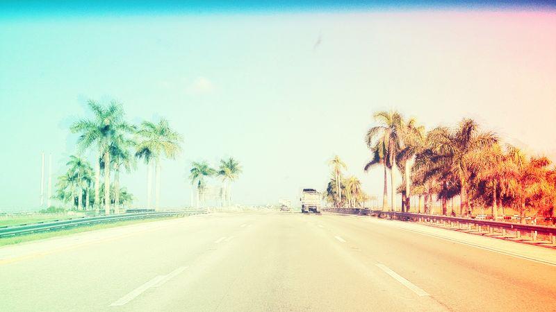 Palm 09