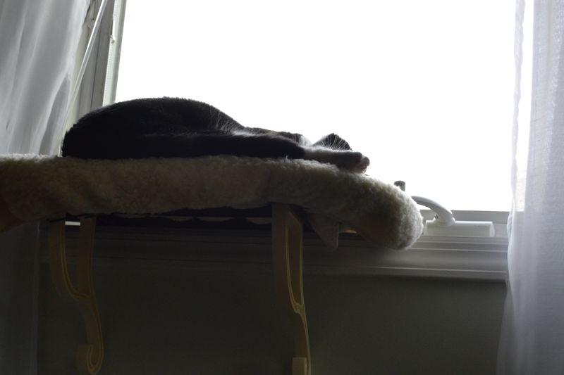 Sleepy perch