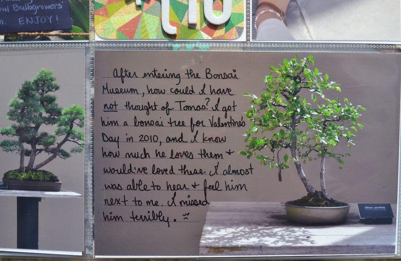05 left bonsai