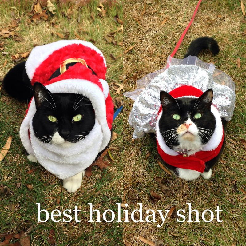 77 best holiday shot