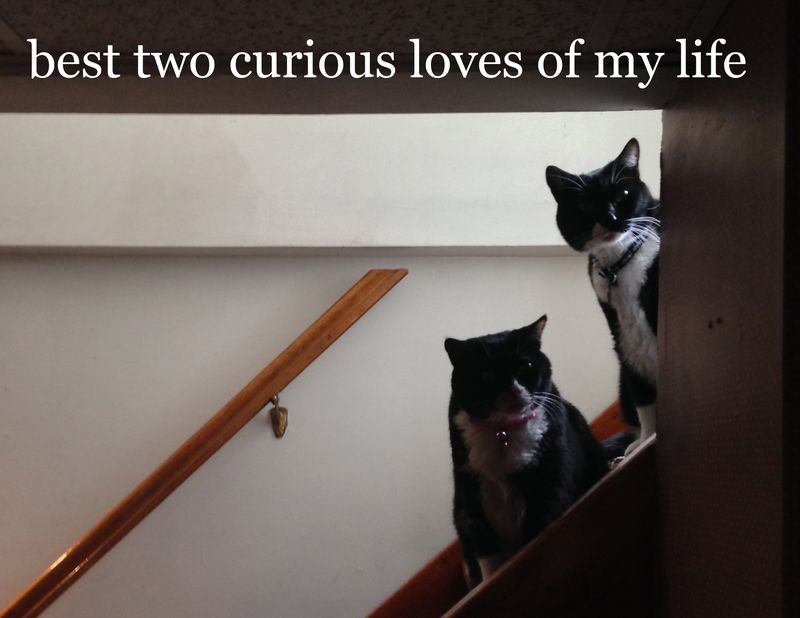 72 best two curious loves of my life