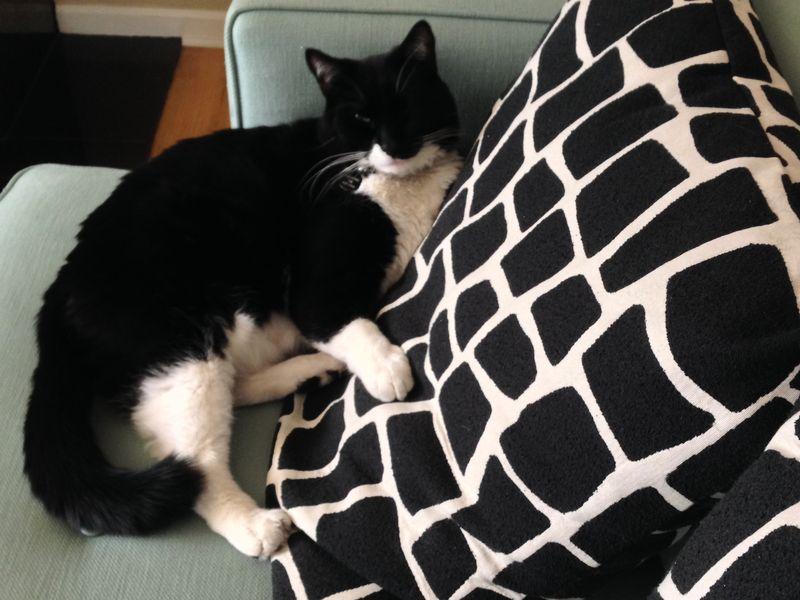 Cats&keyboards 02 | Amanda Rose blog
