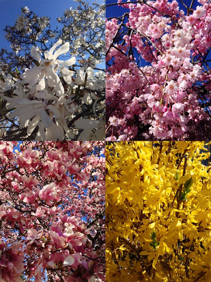 Floral walk collage