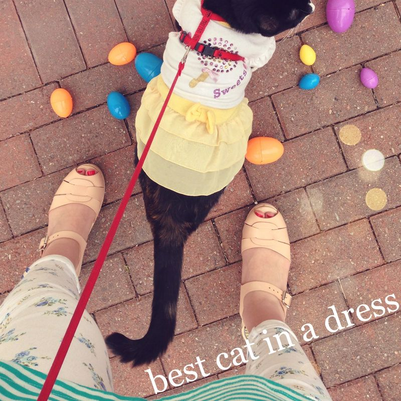 05 best cat in dress