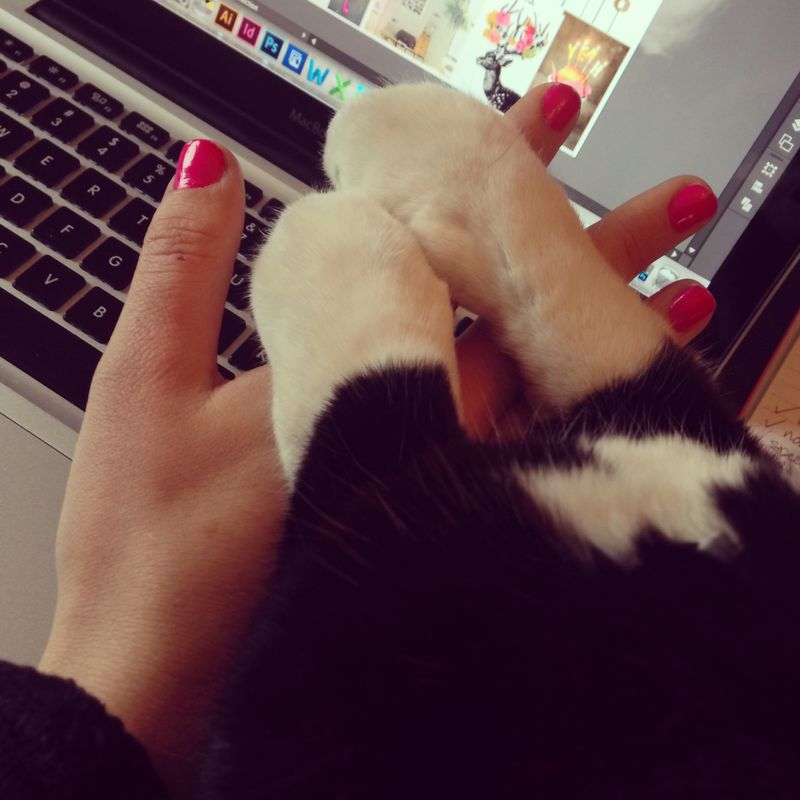 Cats&keyboards 01 | Amanda Rose blog