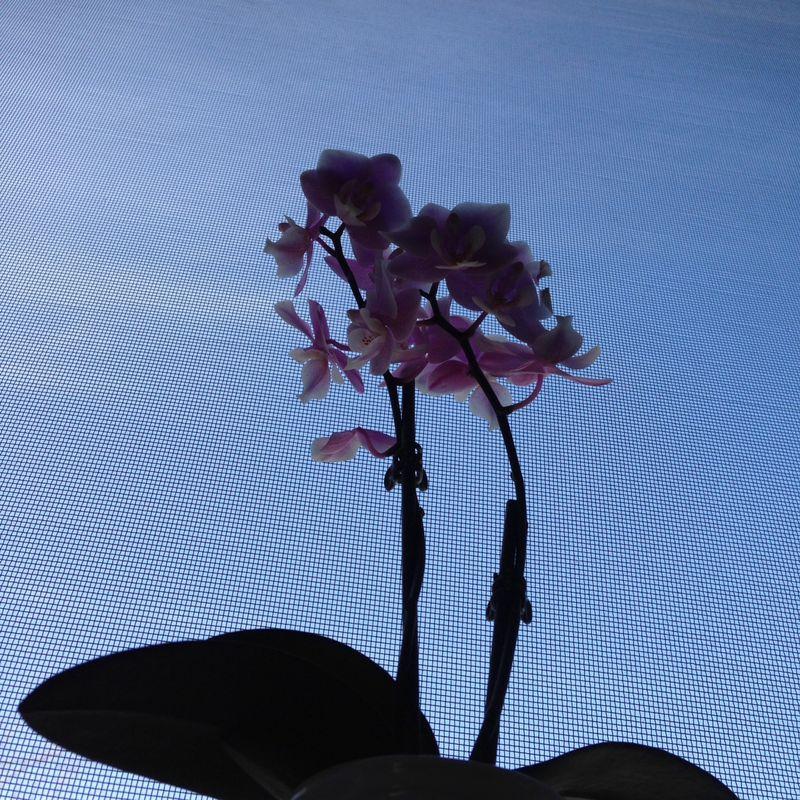 Mini office orchid 03   Amanda Rose blog