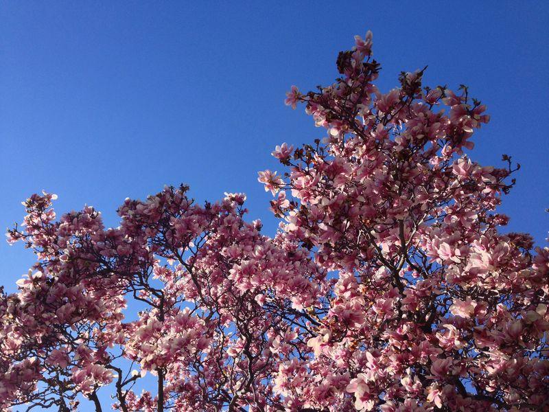 Floral walk 01