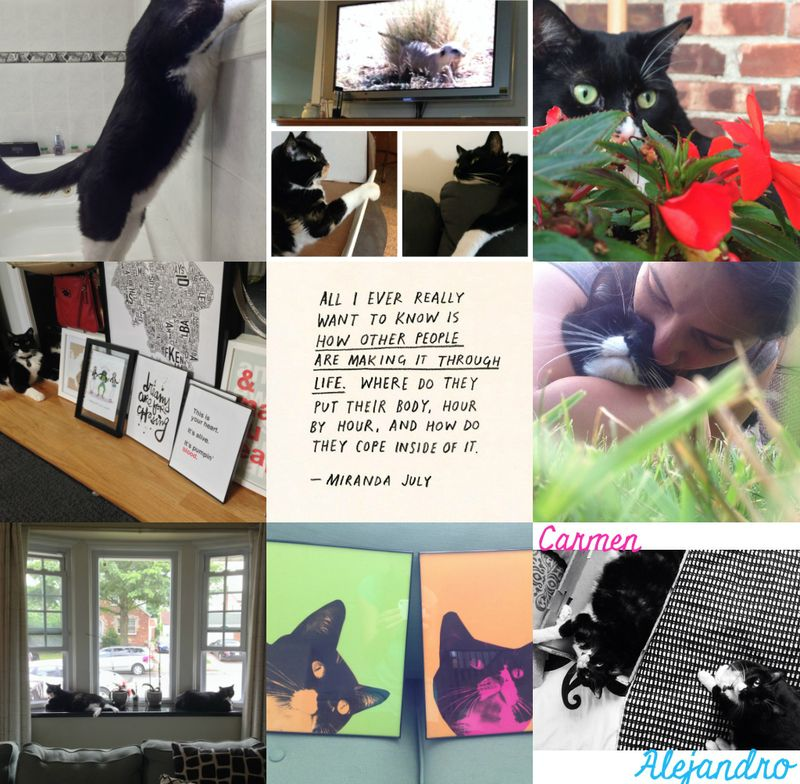Collage 14