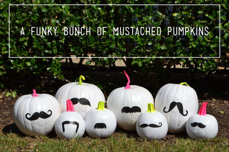 Funky Bunch of Pumpkins 01