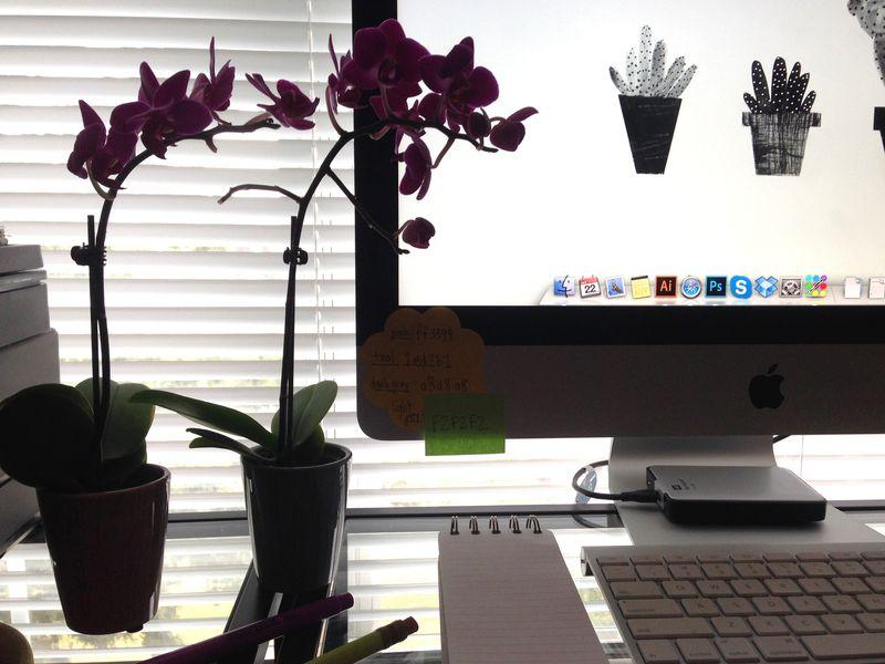 02 mini orchids