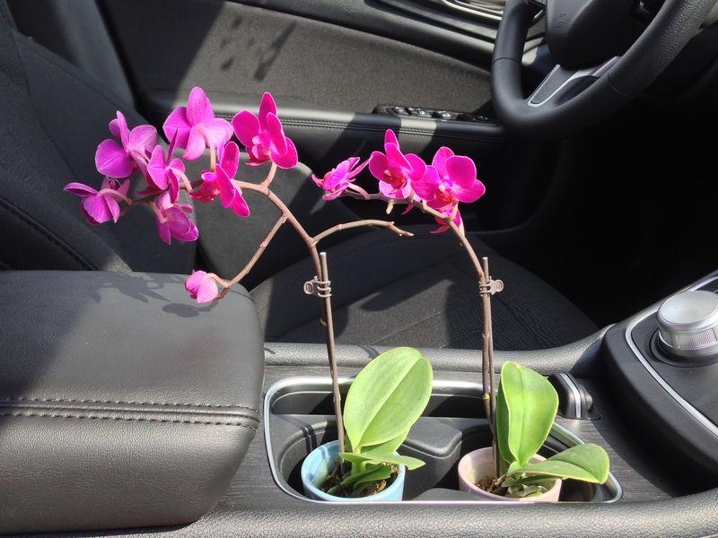 01 mini orchids