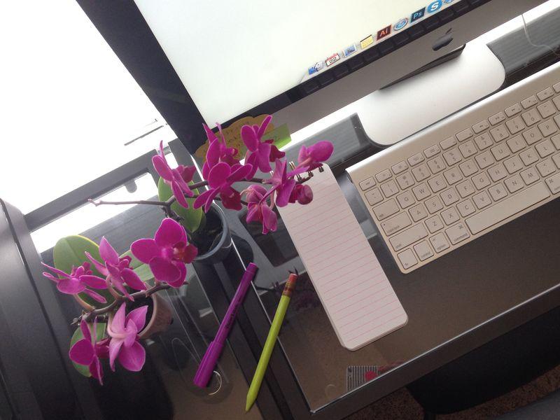 03 mini orchids